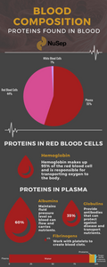 Proteins in Blood Infographic