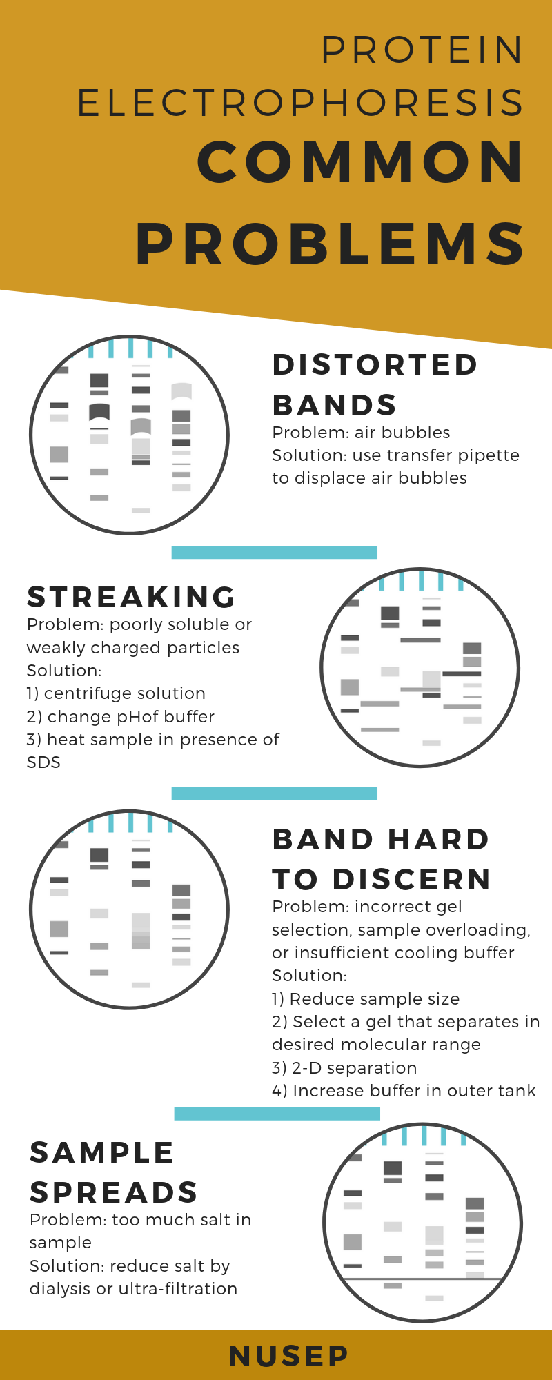 Infographic describing common problems in protein electrophoresis