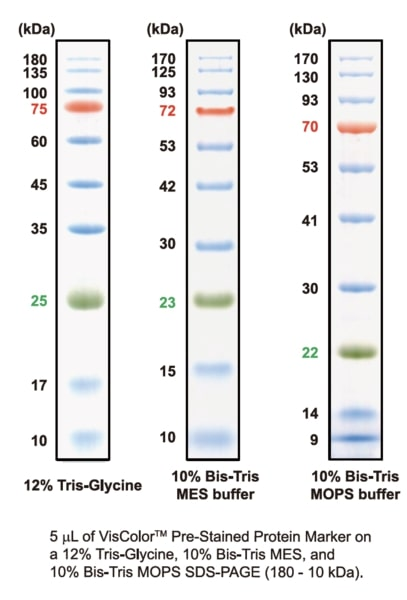 VisColor Pre-Stained Protein Marker (180-10kDa) - Tris-Glycine, Bis-Tris MES, and Bis-Tris MOPS Buffer