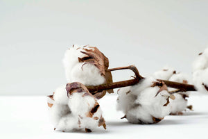 cotton plant cutting