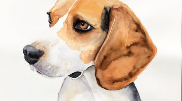 Beagle Watercolour Painting