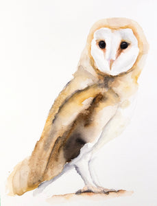 Barn Owl Painting, watercolour 8x10