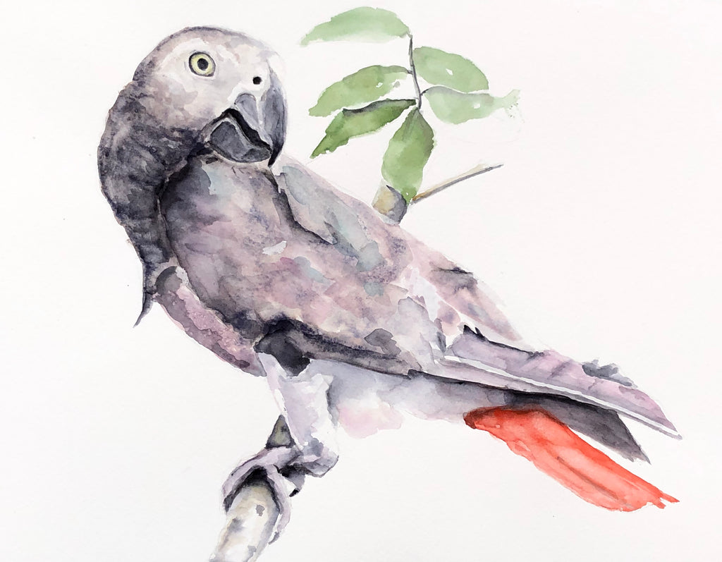 African Grey Painting Commission, Watercolor Painting