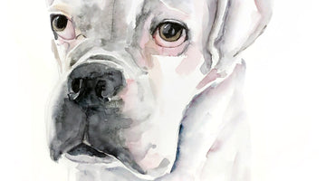 Watercolour Bulldog Commision