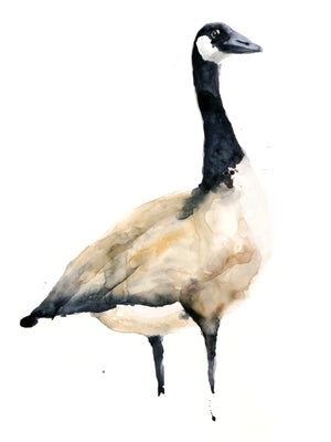 CANADIAN GOOSE  Print of my original Watercolour Painting