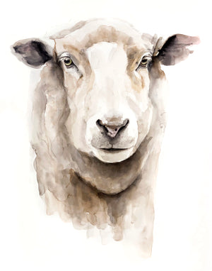 SHEEP Watercolour  Print of my original Watercolour Painting