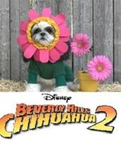 Beverly Hills Chihuahua 2 Flower Costume Posh Pet Glamour Boutique