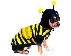 Bee Costume - Posh Pet Glamour Boutique