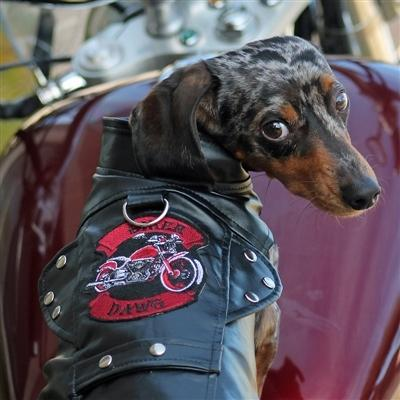 Biker Dawg Motorcycle Jacket - Black - Posh Pet Glamour Boutique