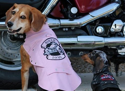 Biker Dawg Motorcycle Jacket - Pink - Posh Pet Glamour Boutique