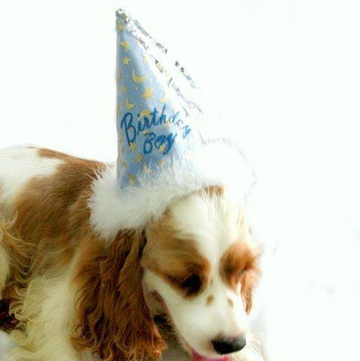 Birthday Boy Hat,posh-pet-glamour-boutique.