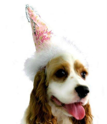 Birthday Girl Hat,posh-pet-glamour-boutique.