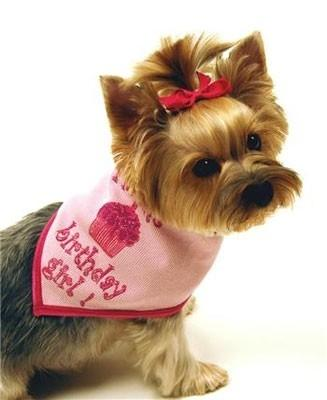 Birthday Scarf- Girl or Boy - Posh Pet Glamour Boutique