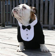 Black Satin Bowtie White Tuxedo Bib Collar - Posh Pet Glamour Boutique