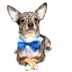 Blue Tie - Posh Pet Glamour Boutique
