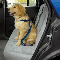 Car Safety Harness - Posh Pet Glamour Boutique