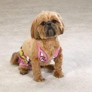 Casual Canine Maui Flowers Bikini - Posh Pet Glamour Boutique