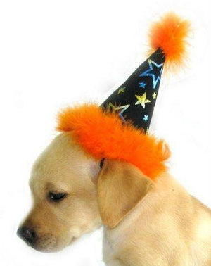 Halloween Hat - Posh Pet Glamour Boutique