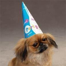 Party Animal Birthday Hats - Posh Pet Glamour Boutique