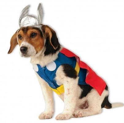 Thor Costume - Posh Pet Glamour Boutique