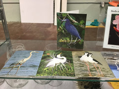 Birds of the Texas Coast Note Cards with Envelopes