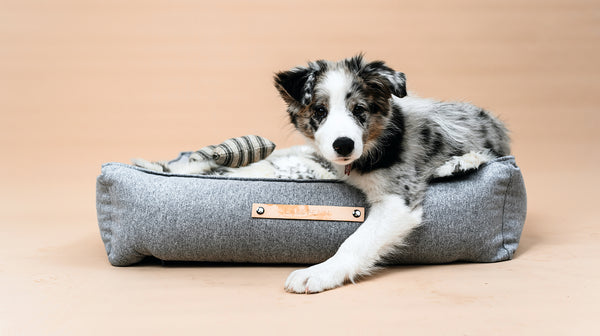 5 Reasons to Invest in a Quality Dog Bed