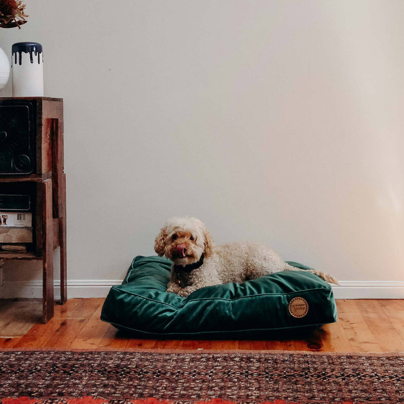 Velvet Dog Bed - Evergreen