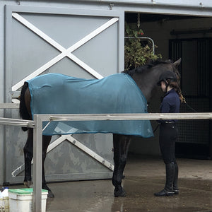 Bay horse in teal scrim sheet in wash rack with girl