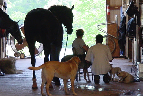 Treating horse in the aisle