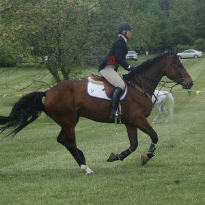 Bay horse galloping in grass showjumping event horse