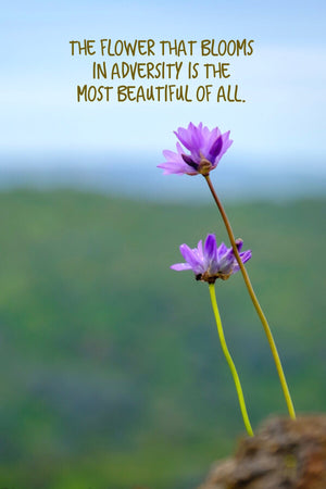 Flower That Blooms In Adversity Inspirational Art