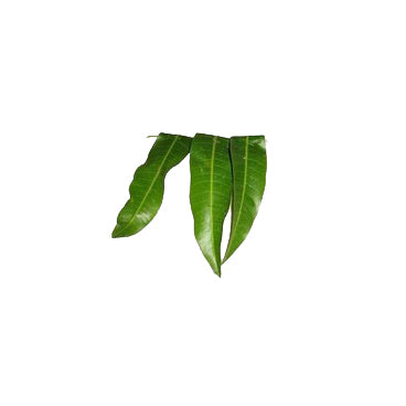 Mango Leaves (Maavilai, மாவிலை)