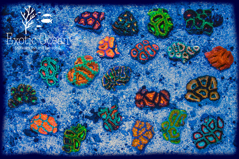 Ultra Acan Pack