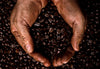 What Eco Coffee Do You Drink? 3 Types and their Benefits