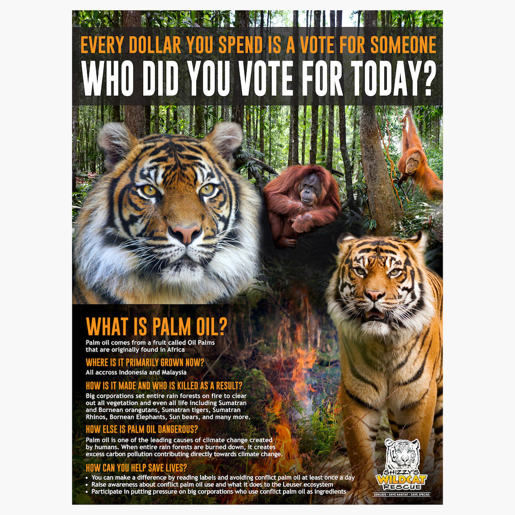 Palm Oil Poster