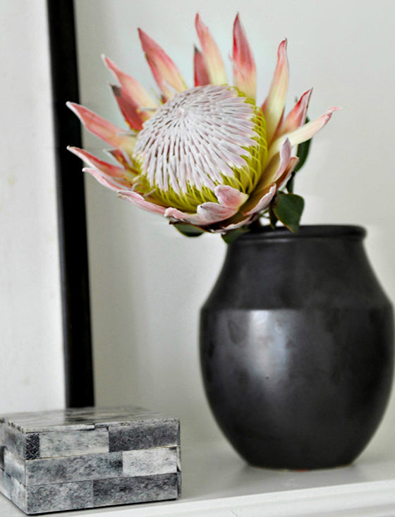 Pretty protea | My all time favourite sculptural flower, the King Protea via Rue