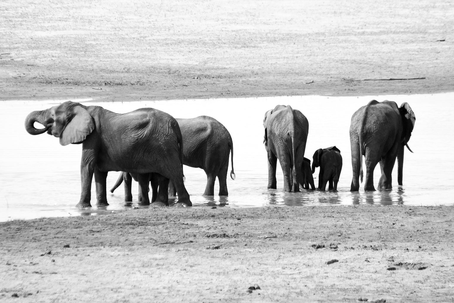 Safari Journal / Blog by Safari Fusion | Giants of Zambia | Photographing Zambia's beautiful Elephants | © Kellie Shearwood