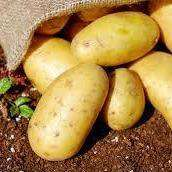 Yukon Gold Potatoes - 5LB