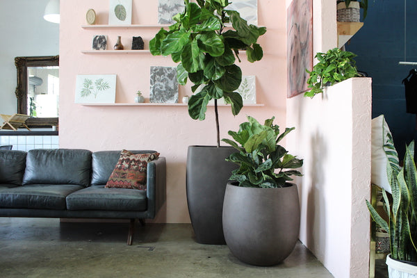 How to Decorate with Plants: How Many Should You Start With?