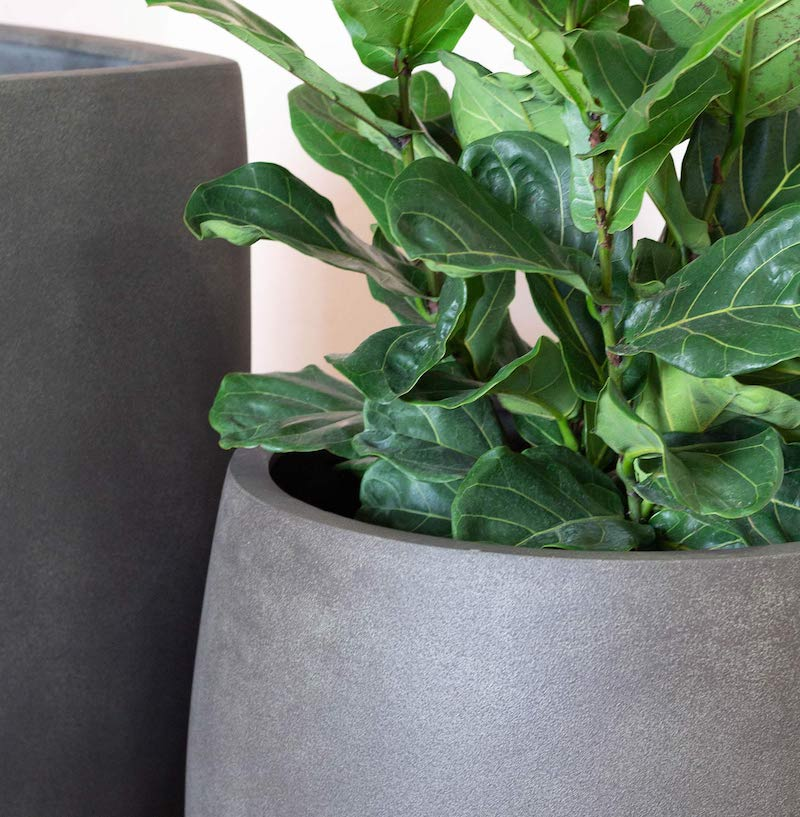 Choosing Houseplants for Large Planters