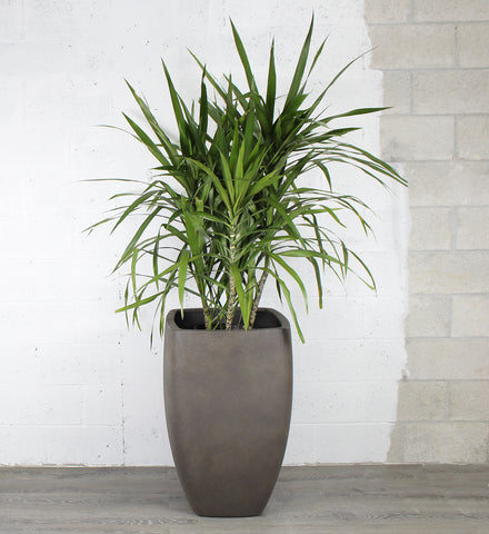 Urban Tall Rounded Square Planter Pot