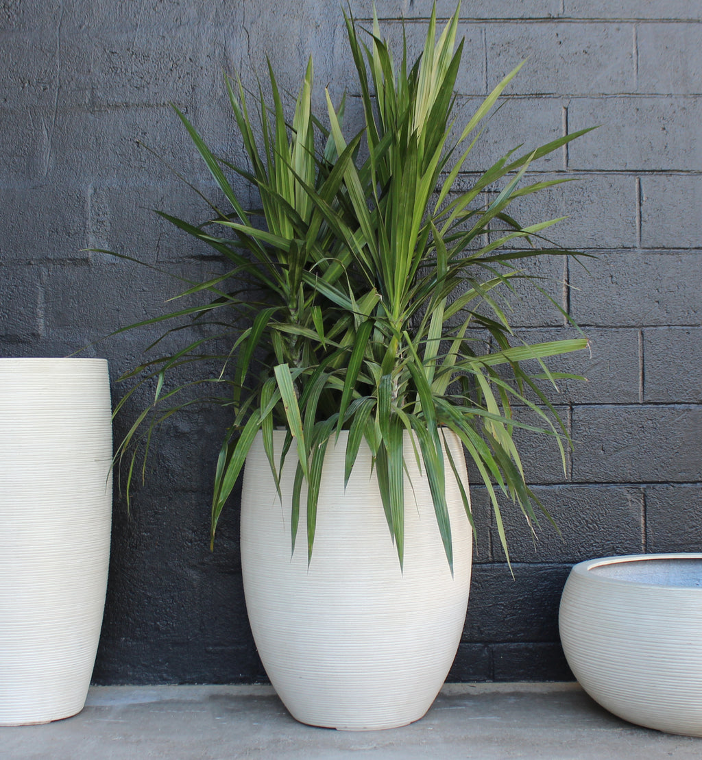Textured Tall Belly Planter Pot