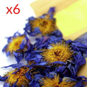 6 Pack of Blue Lotus Flowers - Save 22%