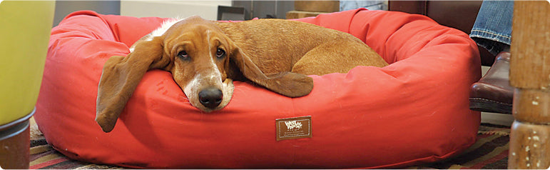 Awesome Dog Bumper Bed