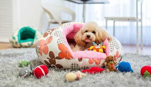 The Worst Mistake People Make When Placing Under Counter: 3 Mistakes People Make When Buying A Dog Bed