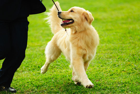 Free Dog Training Tips Puplife Dog Supplies
