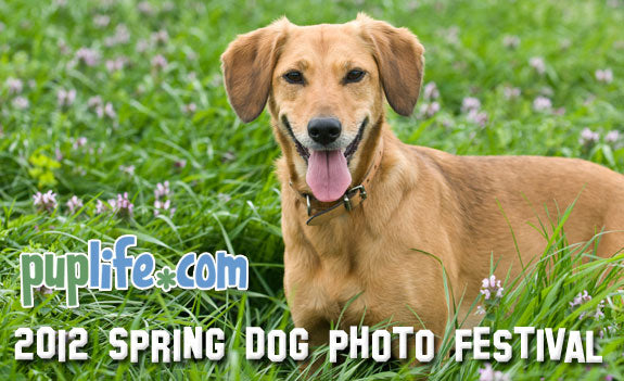 PupLife Spring Dog Photo Festival