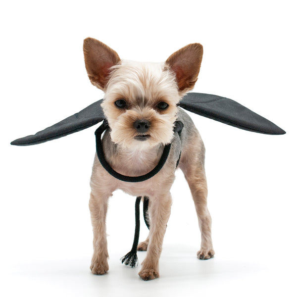 Bat Wings Dog Halloween Costume