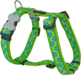 Red Dingo Designer Dog Harness - Stars (Turquoise on Lime Green)