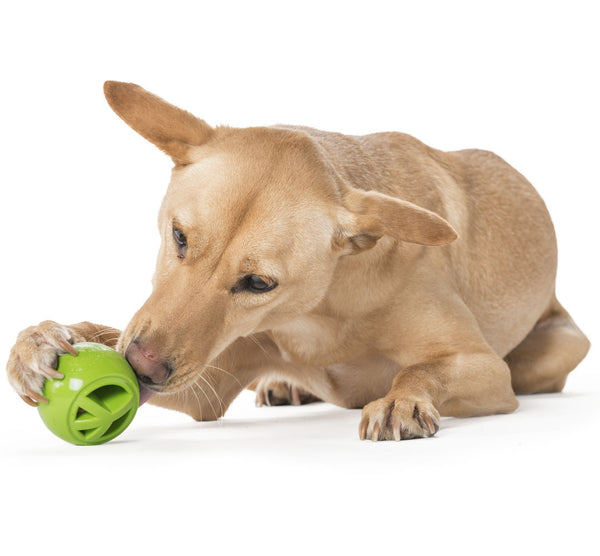 Tuff Toys For Big Dogs